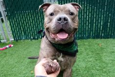 REX -10945 - - Manhattan  TO BE DESTROYED 11/02/17**ON PUBLIC LIST** -  Click for info & Current Status: http://nycdogs.urgentpodr.org/rex-10945/