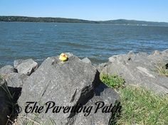 The Duck and the Hudson River: The Rubber Ducky Project Week 7
