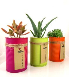 DIY succulent/cacti in a neon painted recycled can planter - by Tasmanian company The Neon Cactus Tin Can Crafts, Diy Arts And Crafts, Handmade Crafts, Kids Crafts, Decorated Flower Pots, Painted Flower Pots, Formula Can Crafts, Neon Cactus, Painted Tin Cans
