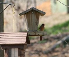 The Best Bird Feeders For Cardinals
