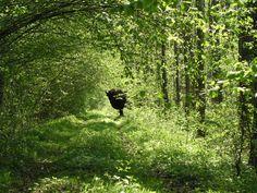 bialowieza forest im Weißrussland Reiseführer http://www.abenteurer.net/3386-weissrussland-reisefuehrer/