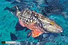 Bonaire fish