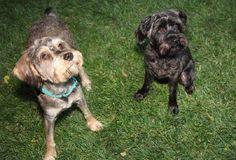 Skye and Erin share their favorite Kudose peanut butter treat recipe.