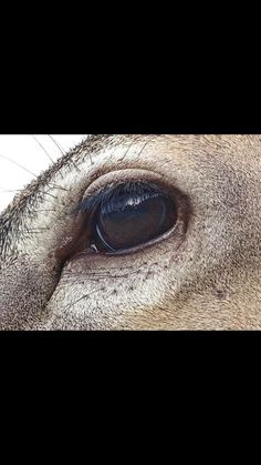 Deer Eyes, Deer Mounts, Deer Pictures, Photos Of Eyes, Animal Anatomy, Photo Reference, Taxidermy, Wood Burning, Ski