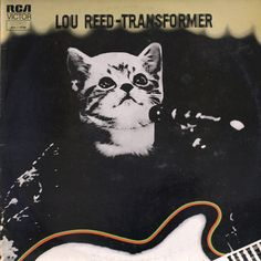 Classic album covers re-imagined with kittens. Lou Reed