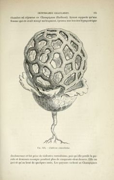 Traité de botanique médicale cryptogamique, - Biodiversity Heritage Library