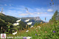 Schöner Schnappschuss während der Wanderung am Nauderer Höhenweg im Dreiländereck