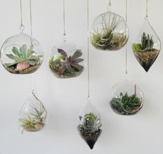 Sukkulenten im Glas im Blickfang & Kreative Deko Ideen mit Pflanzen Succulents hang out in glass terraruim framing The post Succulents in the eye-catching glass & Creative decoration ideas with plants appeared first on Leanna Toothaker. Hanging Succulents, Hanging Plants, Indoor Plants, Hanging Glass Terrarium, Succulent Plants, Diy Hanging, Shade Plants, Hanging Gardens, Succulent Terrarium