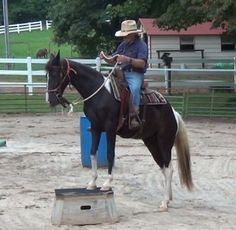 Hanna - Other Tennessee Walking Mare