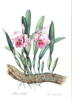 margaret mee   Margaret Mee: A Flor da Lua   Primavera Garden Center