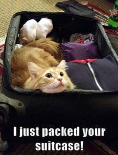 #funny #cats #funny #cat #cute #kitty #humor