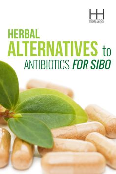 Which herbal antibiotics treat SIBO, how herbal antibiotics work, and why they may be better than pharmaceutical antibiotics. Scd Diet, Gaps Diet, Nutrition Education, Health And Nutrition, Fermented Foods, Body Detox, Healthy Living Tips, Gut Health, Alternative Medicine