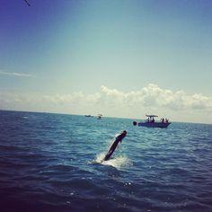 """The Jump"" (Boca Grande, FL)"