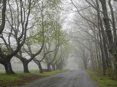 Misty Road in Early Springtime, Cape Elizabeth, Maine Photographic Print by Nance Trueworthy at Art.com