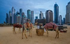 The Old and New Bits of Dubai