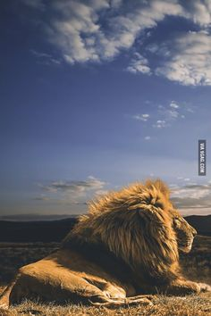 The King and his Kingdom - 9GAG