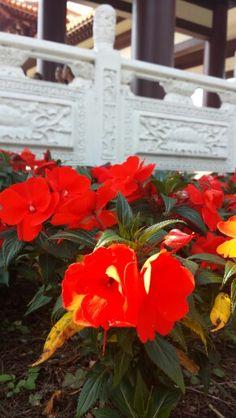 Templo Zu Lai - Cotia-Brasil - 14/09/2014