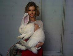 ~ Flemish Giant Rabbit ~