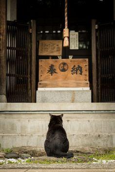 Temple cat, Japan