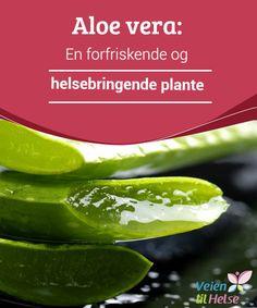 Aloe vera: En forfriskende og helsebringende plante  Aloe vera, også kjent som #mirakelplanten, har blitt brukt i lange tider på grunn av sine mange #helsebringende #egenskaper. Den bidrar til å #forfriske og helbrede huden din, og den er også bra for den generelle helsen.