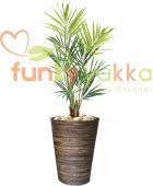 Artificial Kentia Palm in Circular Rolled Banana Leaf Container (FYKANKPBLC)