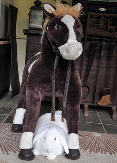 Cuteness #rabbit #rescue #adoptdontshop