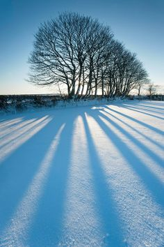 Simple but effective: trees and shadows - Ross Hoddinot https://www.facebook.com/pages/Ross-Hoddinott-Photography/245246055547112