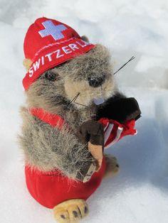 Swiss Marmot