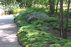 I love moss gardens.  If I only had more shade...