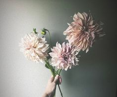 Things I've Learned from Flowers - Adore Weddings The Eighth Day, Bulb Flowers, Little Things, Floral Wreath, The Incredibles, Weddings, Studio, Learning, Floral Crown