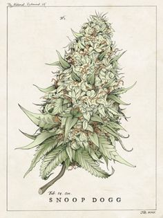 botanical illustration poster - Google Search