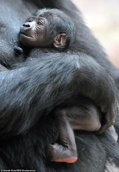 Workers were unaware that its mother, called Shinda, was pregnant, so were delighted after the successful birth