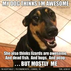 but *mostly* me. ;) funny dogs