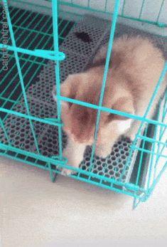 Escape for Some Petting