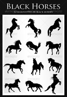 12 Horses — Vector EPS #horse #black horse • Available here → https://graphicriver.net/item/12-horses/157902?ref=pxcr