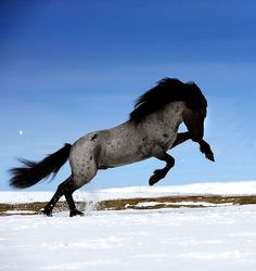 One day I will have a blue roan horse<3