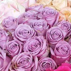 """No filter, pure beauty! "" #flowers #paris #roses"
