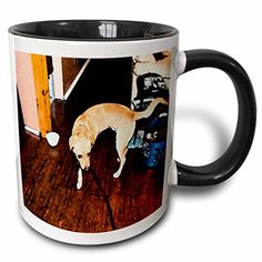 Jos Fauxtographee Realistic - Cute Doggie on Leash On The Hard Wood Floors of Home Near Its Water Bowl - 11oz Two-Tone Black Mug (mug_49462_4) 3dRose http://www.amazon.com/dp/B01351A78U/ref=cm_sw_r_pi_dp_SEaZvb0SHFNSH