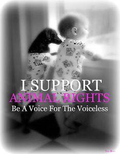 animal abuse donations