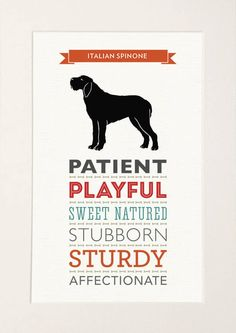 Italian Spinone Dog Breed Traits Print