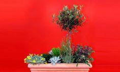 Jardinera con aromáticas