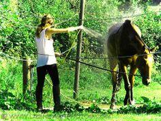 At the end of a chukka  © Liz Shewan, Artist.  #polo #tauntonvale #horse