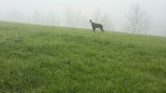GALGO IN THE MIST