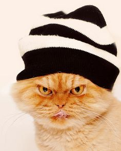 Garfi-Persian cat with hat by E.L.A, via Flickr
