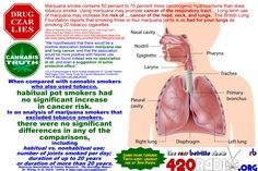 Debunking the reefer madness about marijuana smoking and lung cancer.