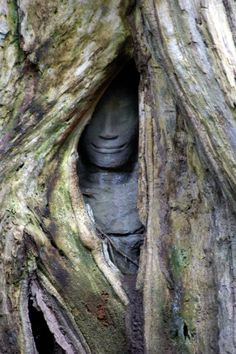 An Apsara statue slowly disappearing behind large roots of the temple, Ta Prohm | Siem Reap, Cambodia