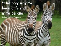 Friends of a similar stripe, side by side through thick and thin.