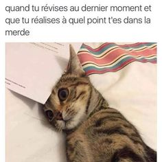 Mdr le chat