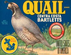 CRATE LABEL QUAIL CONTRA COSTA BARTLETTS PEARS CALIFORNIA VINTAGE POSTER REPRO in Art, Art from Dealers & Resellers, Other Art from Resellers | eBay