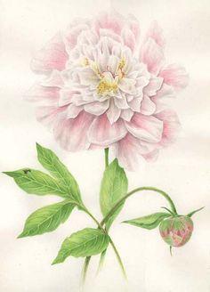 Volume two of botanical prints by Sabina Fascione Alcorn